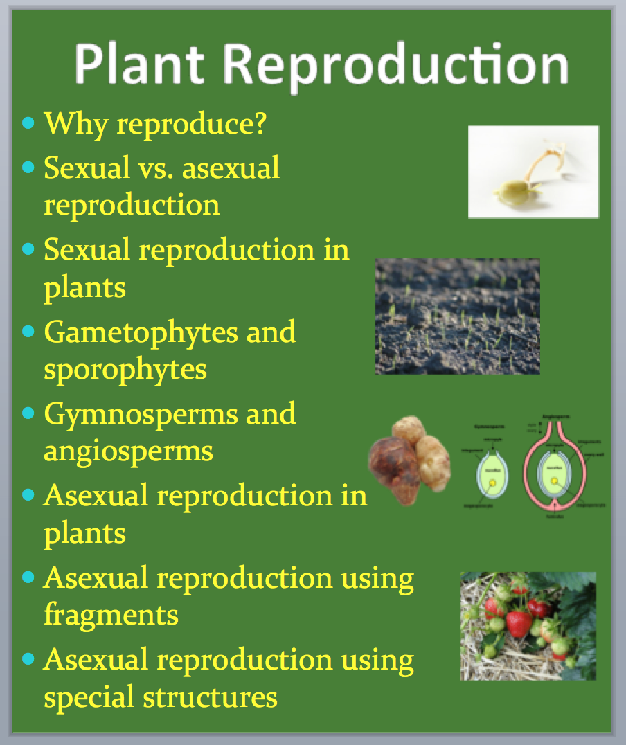 Plant Reproduction - A Grade 11 and Up Biology PowerPoint Lesson    Powerpoint lesson [ 1076 x 904 Pixel ]