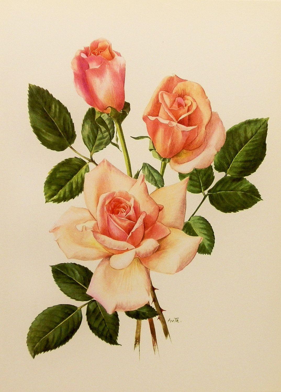 Vintage Flower Print Rose Art Botanical Book Plate Pink