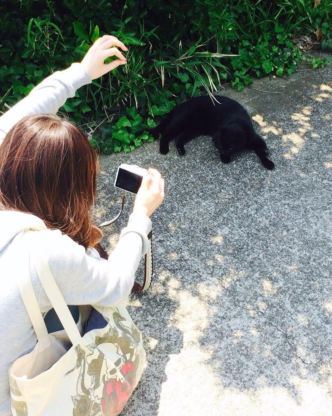 私猫見るとすぐにこう笑  #猫 #お写んぽ #オリンパス #オリンパス倶楽部 #ミラーレス一眼 #cat #catstagram #olympus #olympuspen #epl7 #photo #instagood by n4a5n