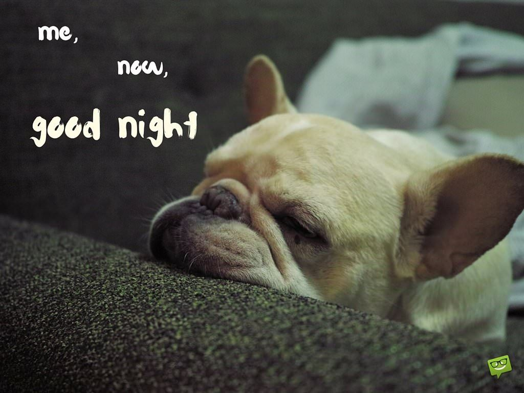 Like a kiss goodnight good night dogs french bulldog