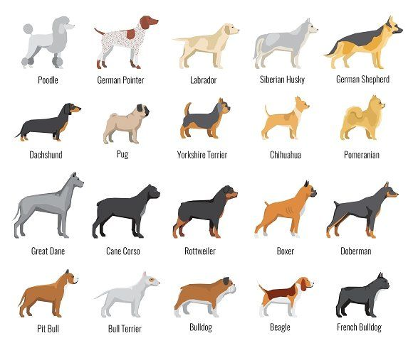 Dogs breed vector flat icons set by MicroOne on @creativemarket