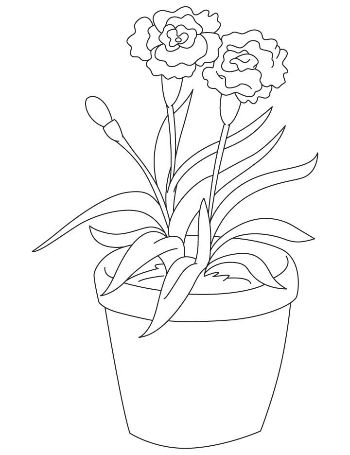 Light Red Carnation Coloring Page Red Carnation