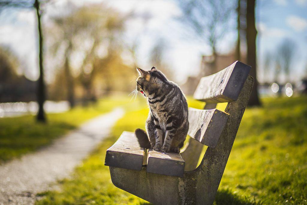 صور مدهشة أفضل الصور الرائعة والمدهشة جدا Cats Animals Pictures