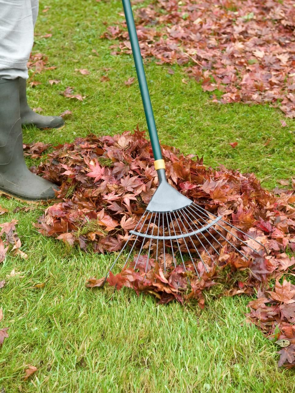 15 Year Round Lawn Care Tips Fall Lawn Care Lawn Care Tips