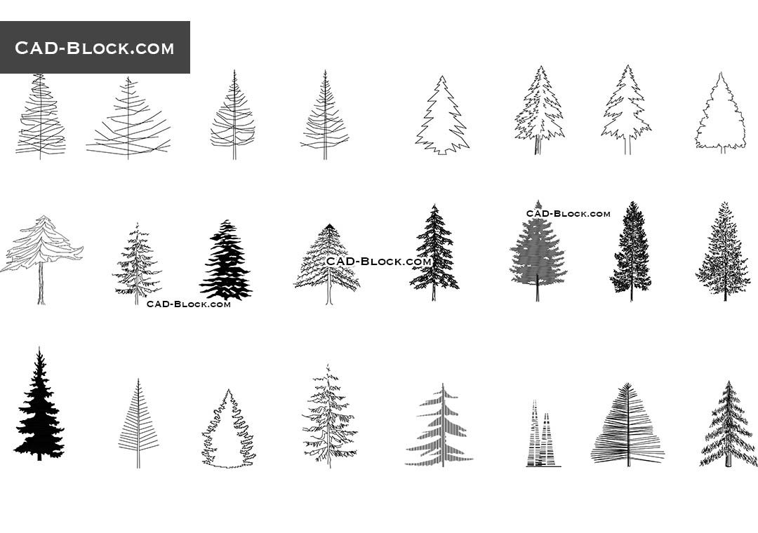 Coniferous Trees Conifer Trees Pine Tree Drawing Tree Illustration