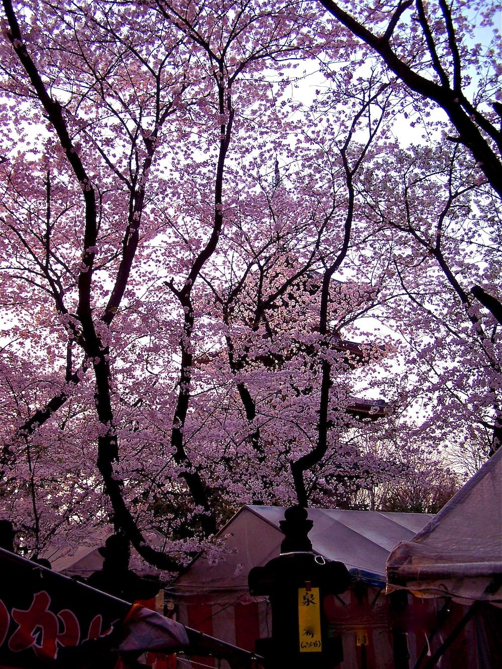 One Of My Favorite Times Of Year To Visit Japan Is During Sakura The Annual Spring Cherry Blossom Festival When The Country Is Bursting With Blossoms A Jepang