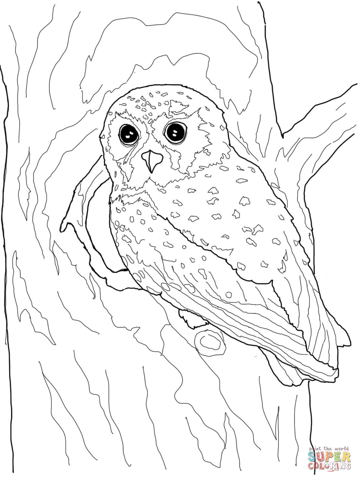 Pin by Małgorzata Kitka on Coloring pages - Owls | Pinterest | Owl ...
