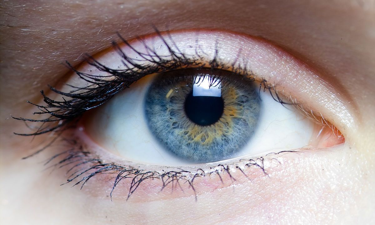 The Exterior Functions And Structure Of A Human Eye Are The Human - Human eye