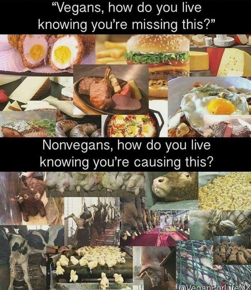 Vegane Zitate