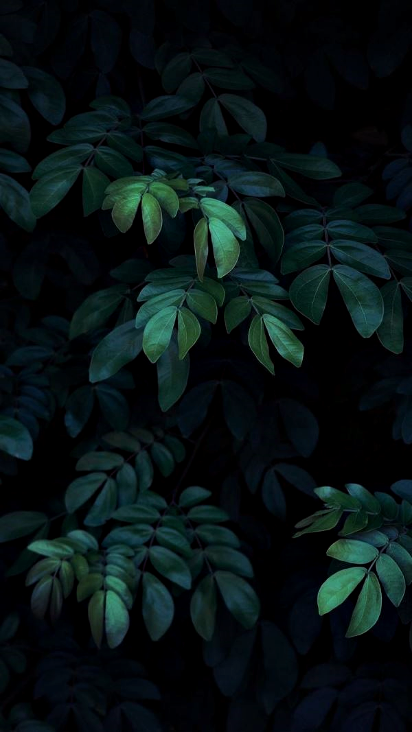 Nine Co Greens Dahon Flora Leaves Nature Nature Lover Plants Trees Tropical Photography Pinterest Pi Fond D Ecran Telephone Nuances De Vert Fleurs