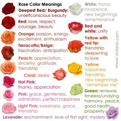 Common Rose Color Meanings For Deepest Red Burgundy Red Red And White Yellow With Red Tip Orange Yellow Rose Color Meanings Color Meanings Rose Meaning