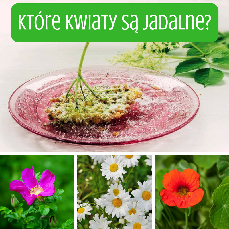 Ktore Kwiaty Sa Jadalne Herbs Plants Food