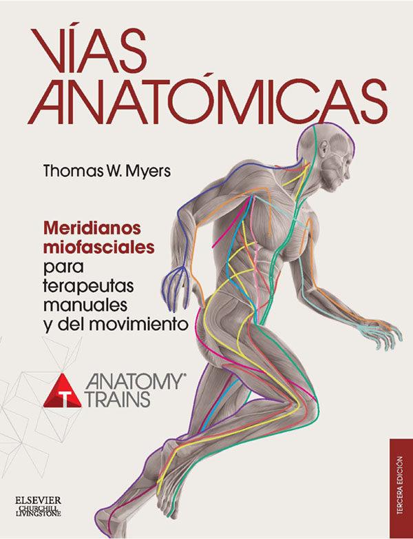 Vías anatómicas. Meridianos miofasciales para terapeutas manuales 3 ...