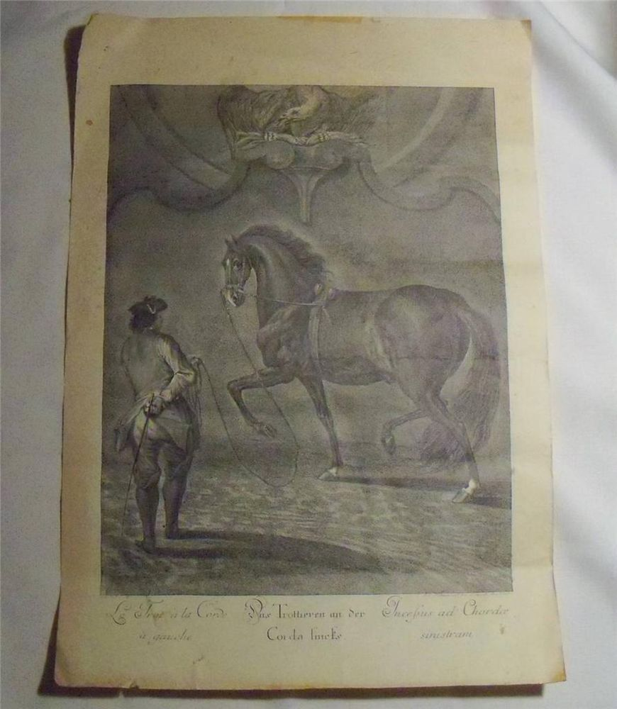Ridinger Vintage Horse Print~Trottieren an der Corda Lincks~Classical Dressage #Vintage