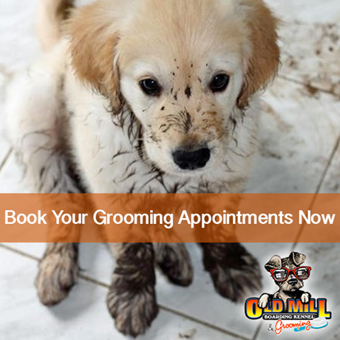 A Well Groomed Pet Will Track Less Mud Into Your House And Make For Easier Clean Up After Playing Outside Keep Your Home And Your Pe Your Pet Pets Fur Babies