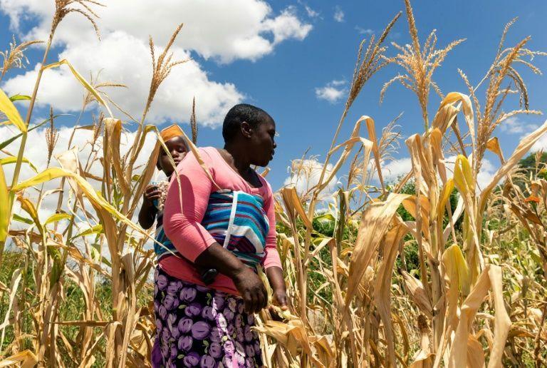 Zimbabwe facing 'manmade' starvation, UN expert warns in