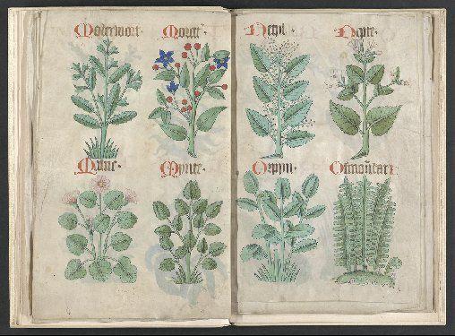 Helmingham Herbal and Bestiary 1500