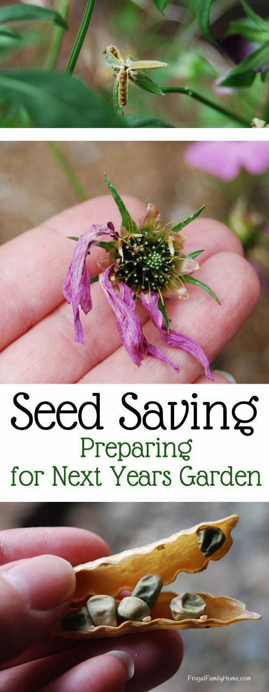 Seed Saving, Preparing for Next Year's Garden