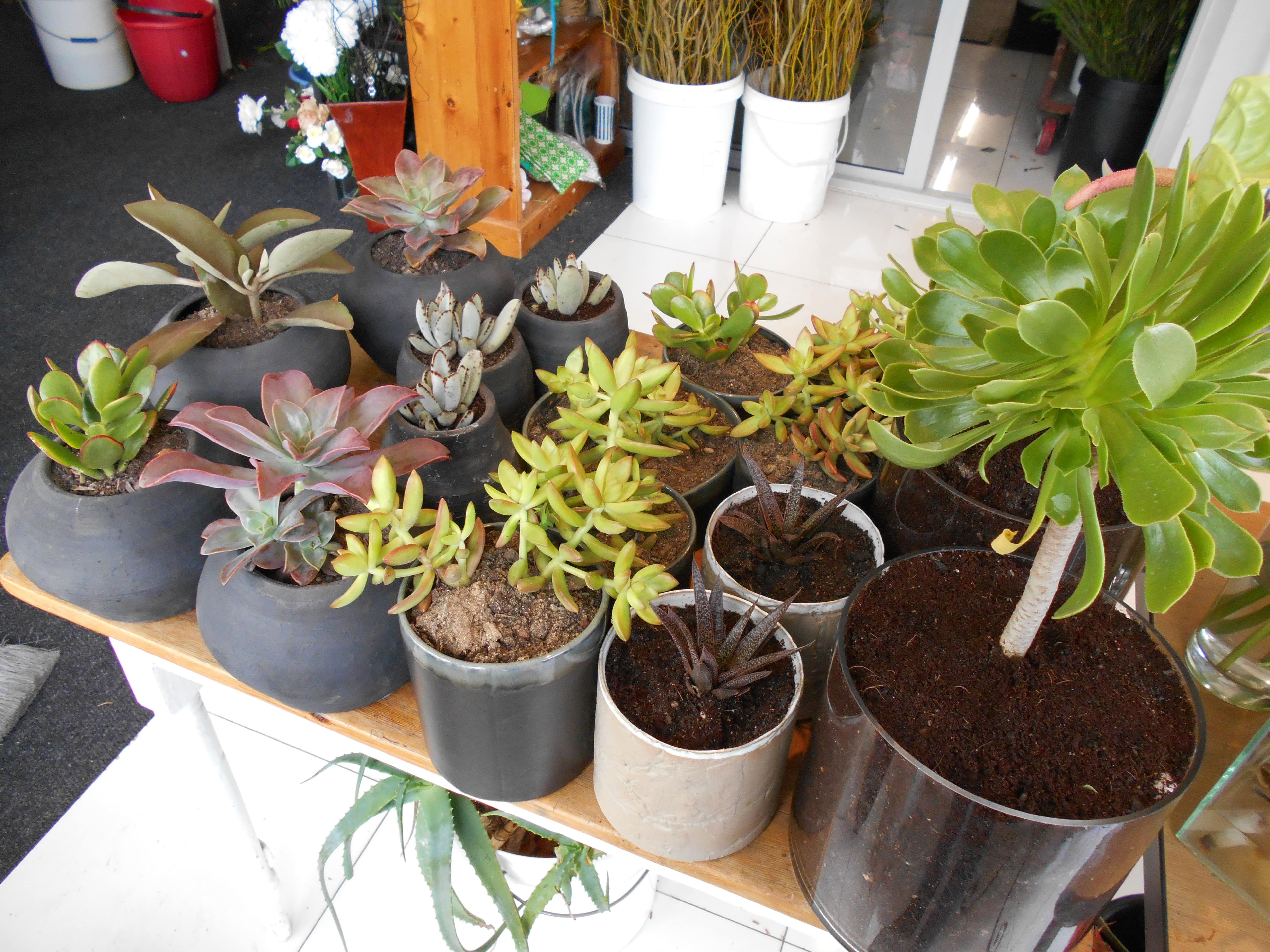 Potted cacti plants and succulents for display for Work & Co offices.