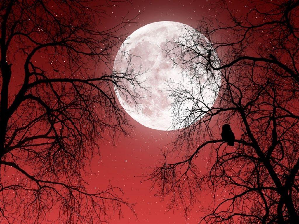Full Moon Red Sky Dark Trees Wallpapers Dark Tree Red Sky Full Moon