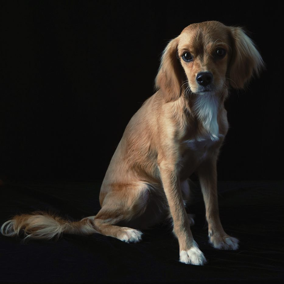 My Boy Winston 9 Months Dogsofinstagram Dog Doggy
