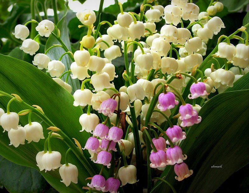 Maj W Moim Ogrodzie Garden Grapes Inspiration