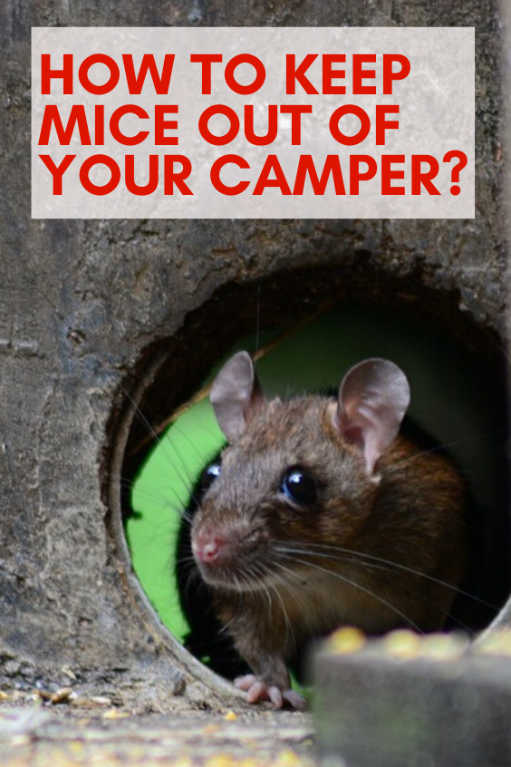 How to Keep Mice Out of Your Camper?