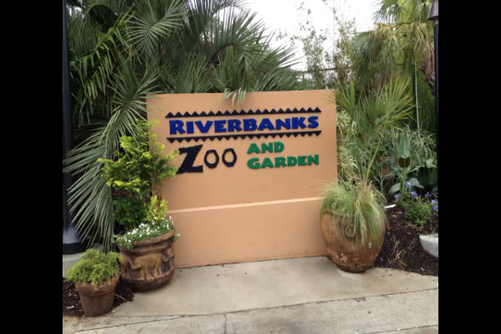Riverbank Zoo Christmas Lights