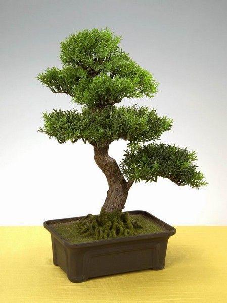 Drzewko Bonsai Nakamura 60 Cm Kwiaty Sztuczne 5923102531 Oficjalne Archiwum Allegro Plants