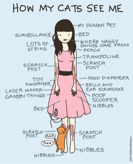 How my cats see me...