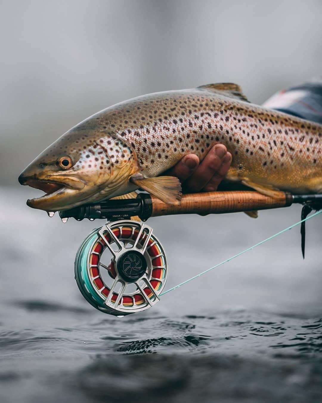 Каких рыб ловят нахлыстом