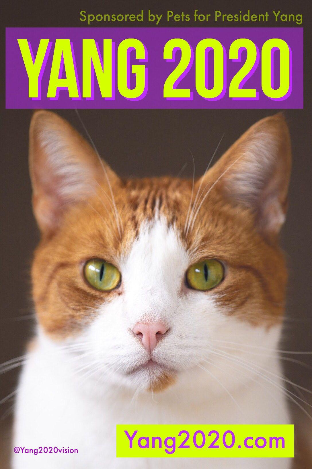 Stoner Gift Ideas 2020 YANG 2020 VISION   Pets for President Yang SUPER CUTE!! SO ADO