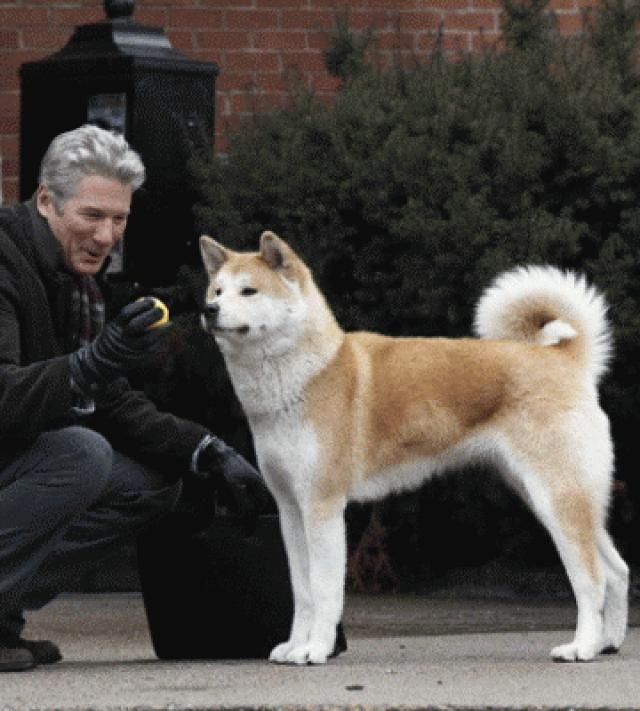 Pelicula hachiko el perro fiel online dating