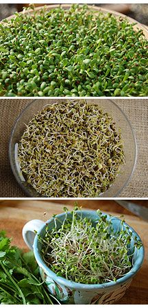 I love growing my own sprouts!! Sprouting 101 sprouts are nuggets of nutrient gold! These little guys are packed with proteins, digestible energy, amino acids, phytochemicals, enzymes, vitamins and minerals and antioxidants. In short, they're healthy little buggers! Most grow in 7 days.