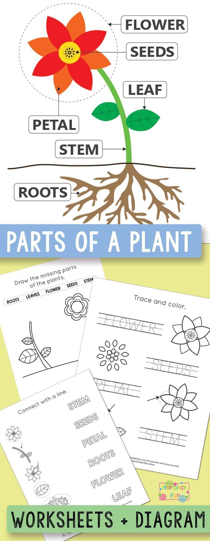 Free Printable Parts of a Plant Worksheets - itsybitsyfun.com   Plants  worksheets [ 1800 x 700 Pixel ]