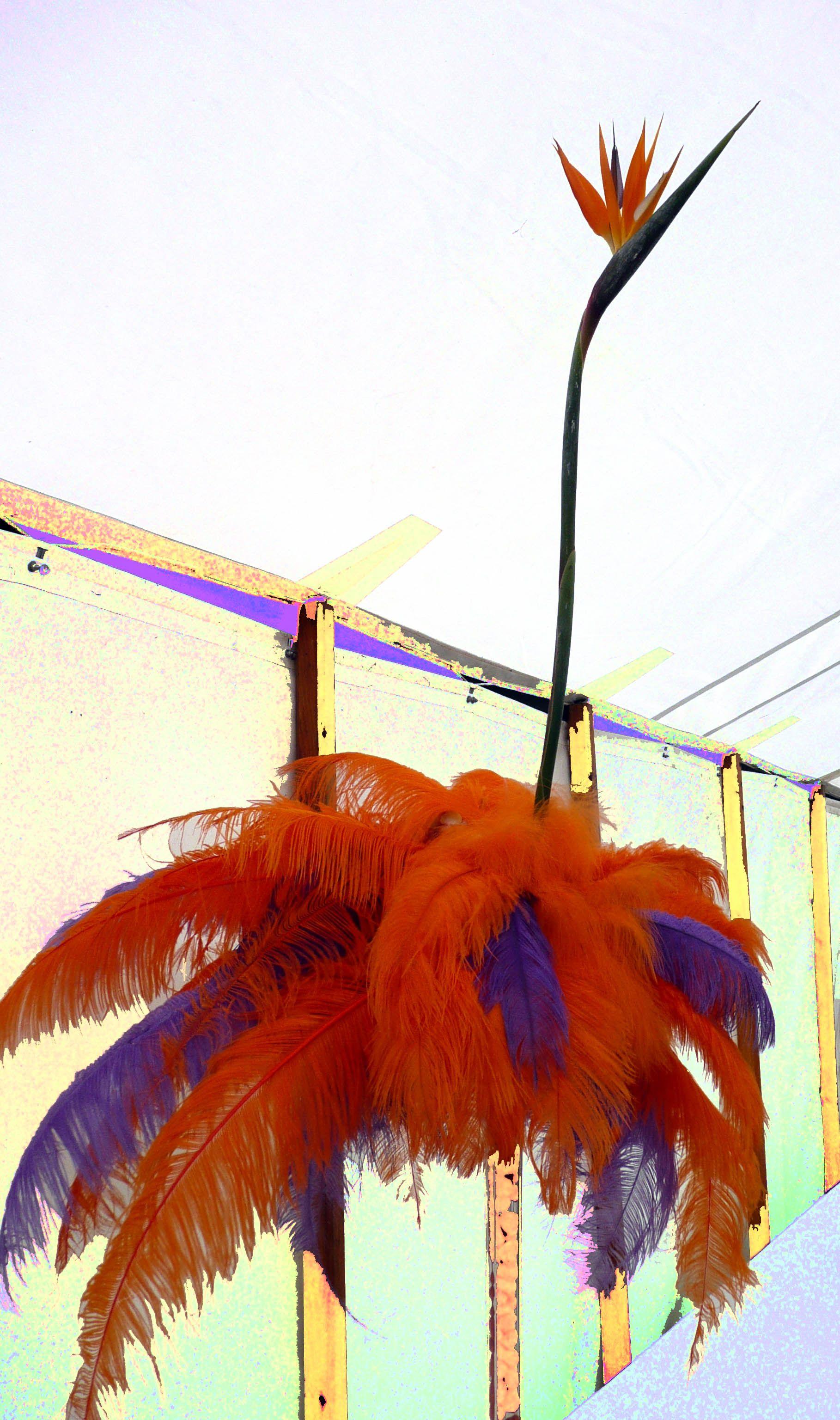 Halifax show 2012 - mad flamingo