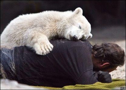 Knut the polar bear cub