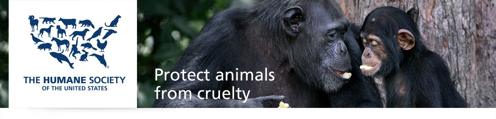 Protect Animals   Give a Gift - The Humane Society of the United States