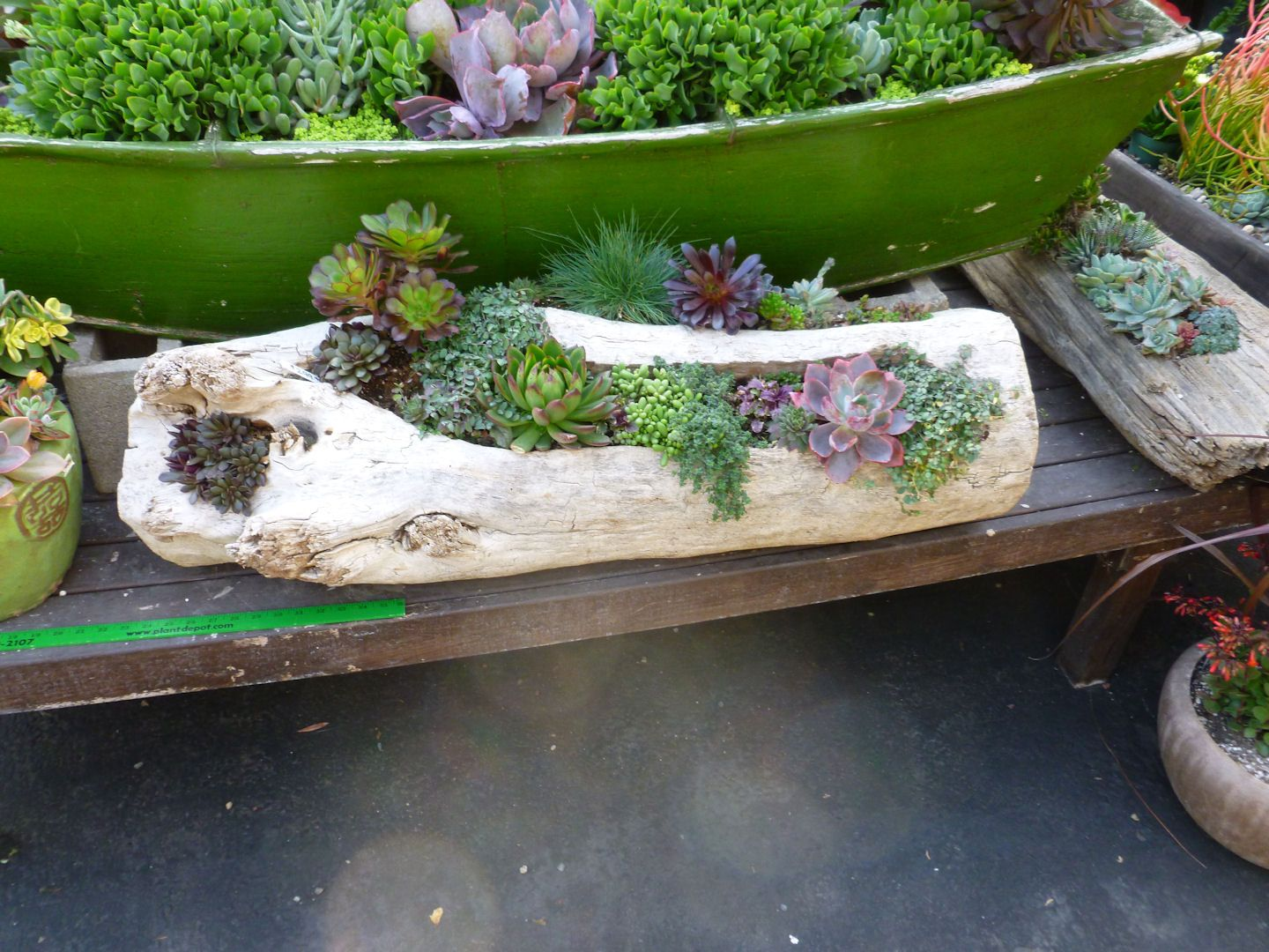 Driftwood planter planted with succulents   Eco - Driftwood ...