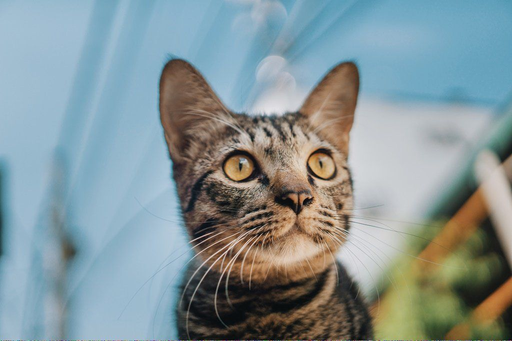 Cats That Don T Shed Catssayingheyreferral 272914691 Why Do Cats Purr Cat Adoption Cats That Dont Shed