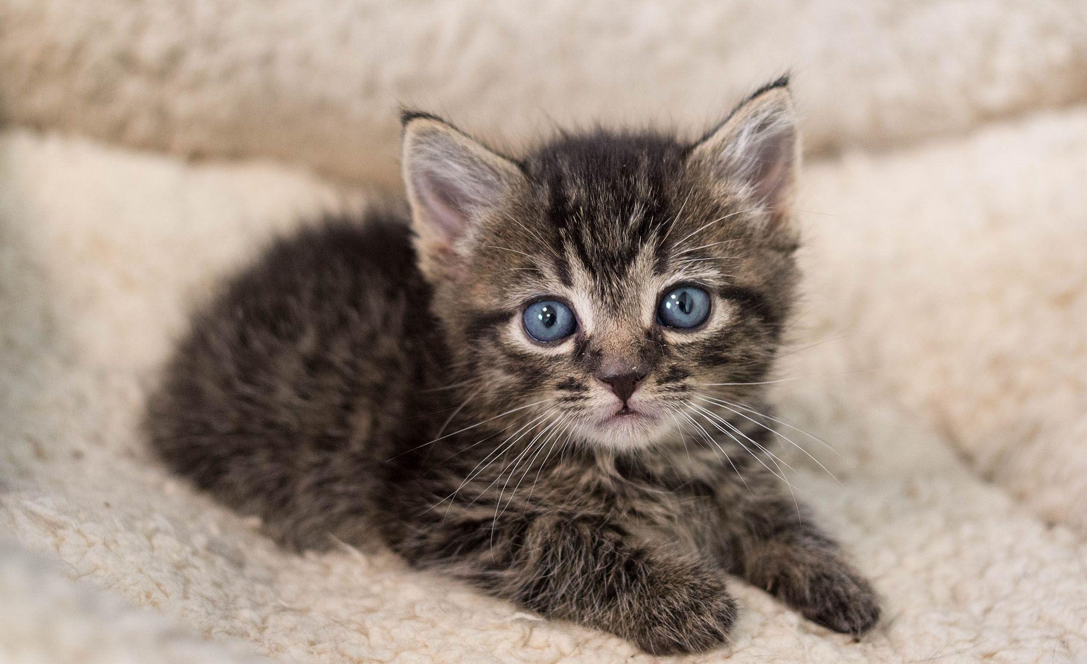 Kitten Lady Neonatal Kitten Rescue And Advocacy Learn More