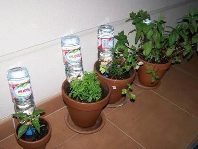 O que fazer com as minhas plantas nas férias. Uma das preocupações mais comuns que surge quando vamos de férias é o cuidado das nossas plantas. O que fazer com elas? Quem as vai regar? Estas são algumas das questões que fazemos antes de partir pa...