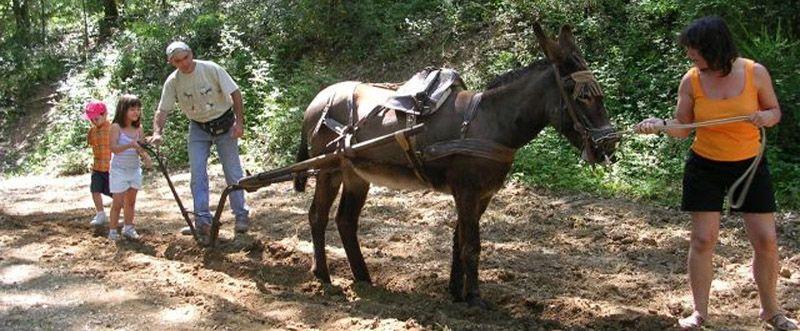 """Pruebas para obtener el """"carnet de conductor de Burros"""". - Tests to obtain the """"driver license Donkeys"""". Cortesía de Rucs del Corredor, Canyamars (Barcelona)."""