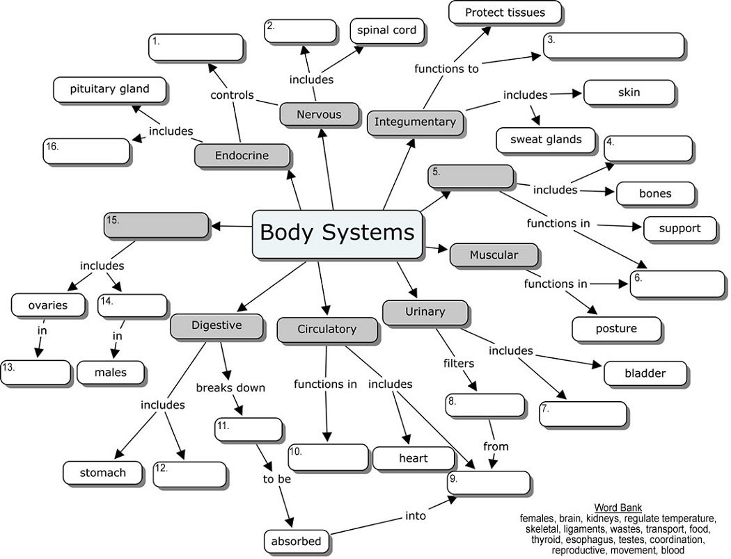 body systems concept map