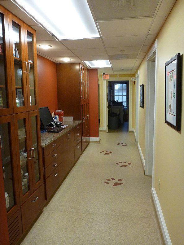 Northpaws pharmacy Clinic interior design, Hospital