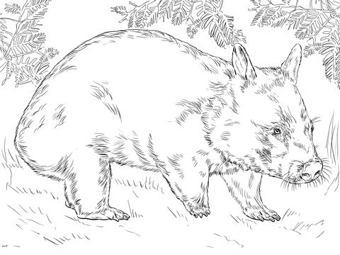 Hairy Nose Wombat Coloring page   La grille   Pinterest   Printable ...
