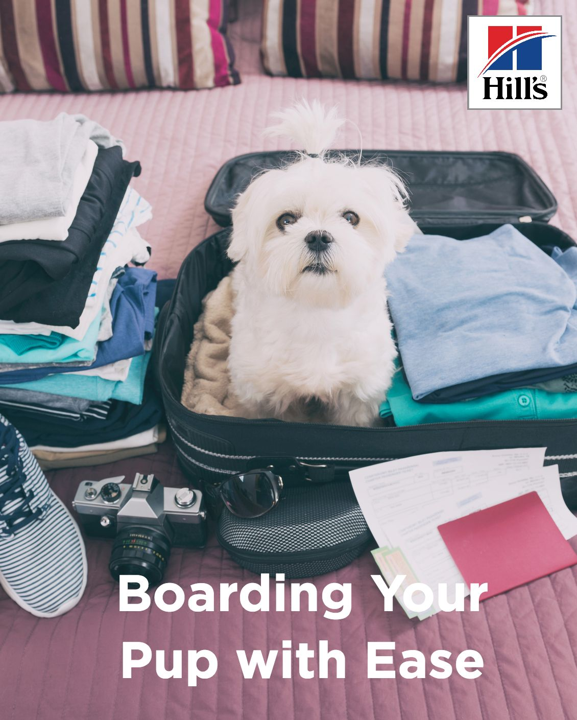Options For Boarding Your Puppy When You Re Away Pet Travel Flying Dog Pet Friendly Hotels