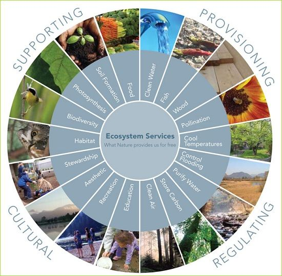 Home Design Ecological Ideas: What Nature Provides Us For Free. Ecosystem Services By