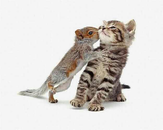 Squirrel kisses