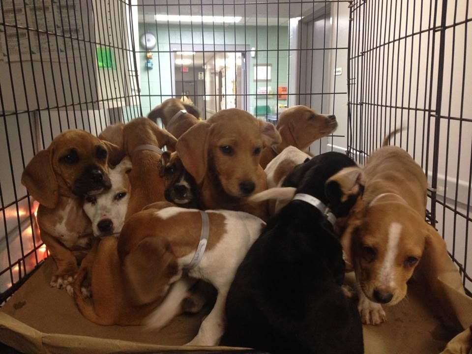 Greenville SC__ Ringworm Puppies need rescue by 10/30/15